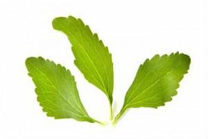 Propiedades Medicinales Stevia