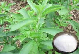 Stevia Propiedades